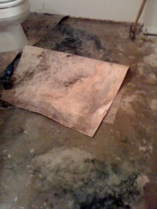Atlanta mold remediation